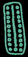 pilstrip mint