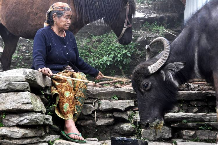 Nepal trekking 8
