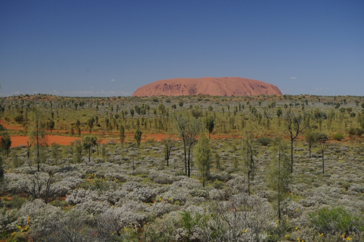 Uluru standing out from the plain.