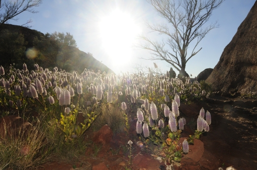 A wild flower field in the morning sun.