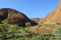 Green vegetation has sprung up due to the rainfall from the otherwise arid rocks of Kata Tjuta.