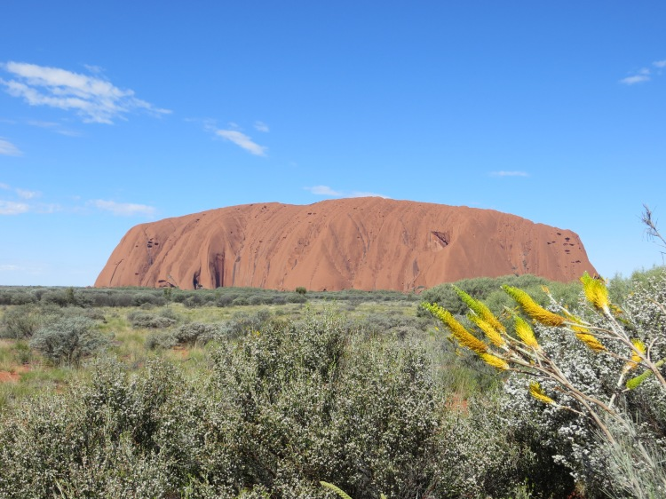 A rare sight: Uluru amidst a green field with wild flowers.
