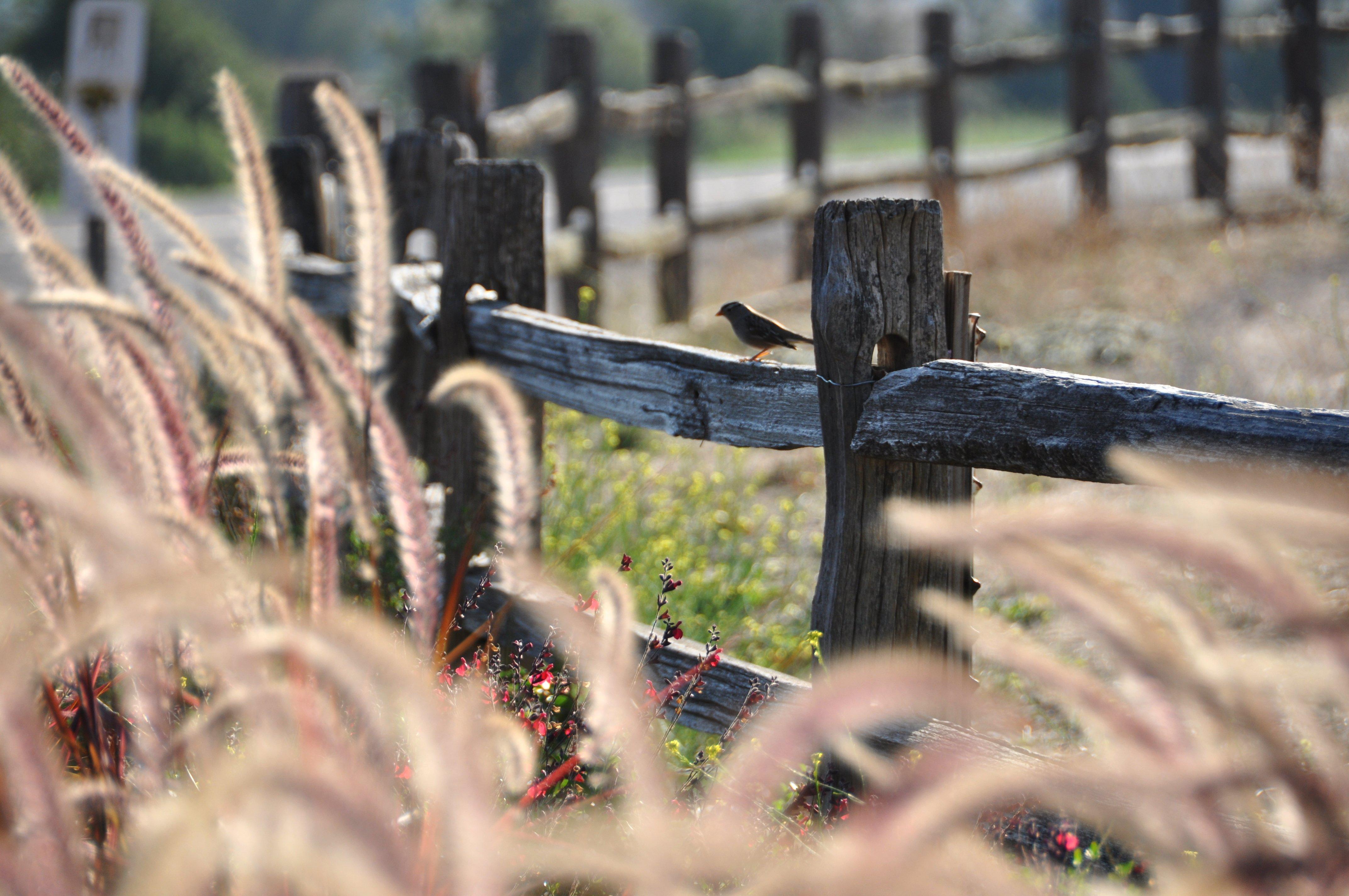 Fences of Neverland