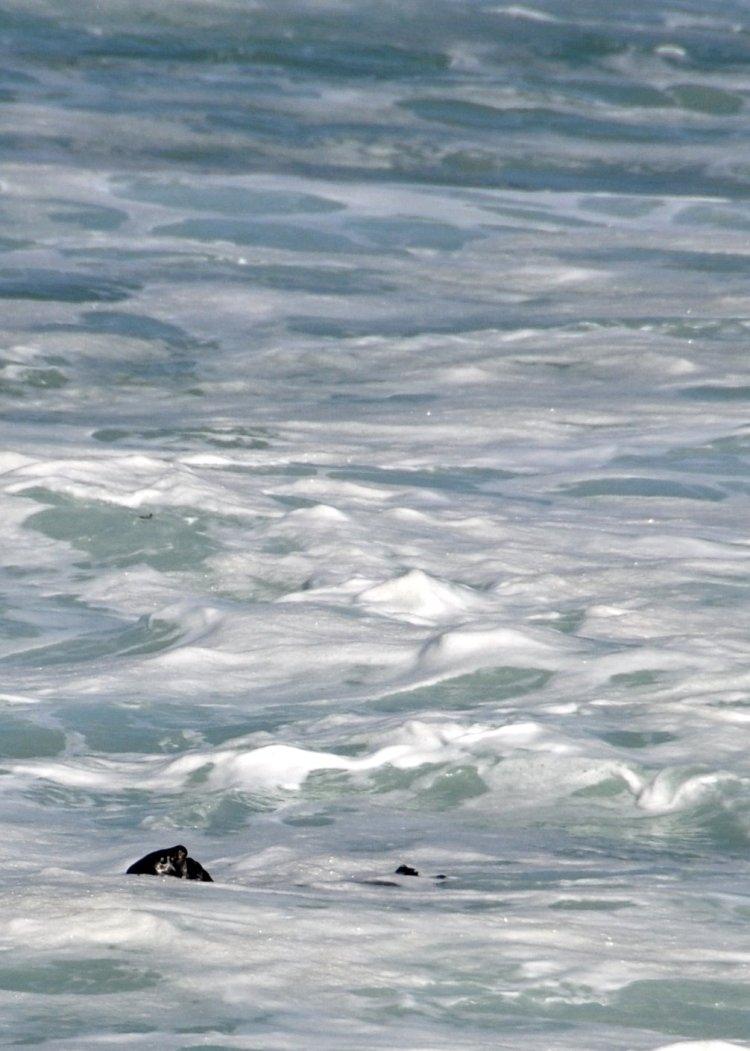 Sea otter :)