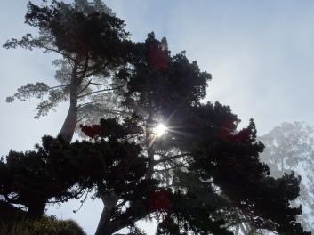 Light play in Julia Burns State Park