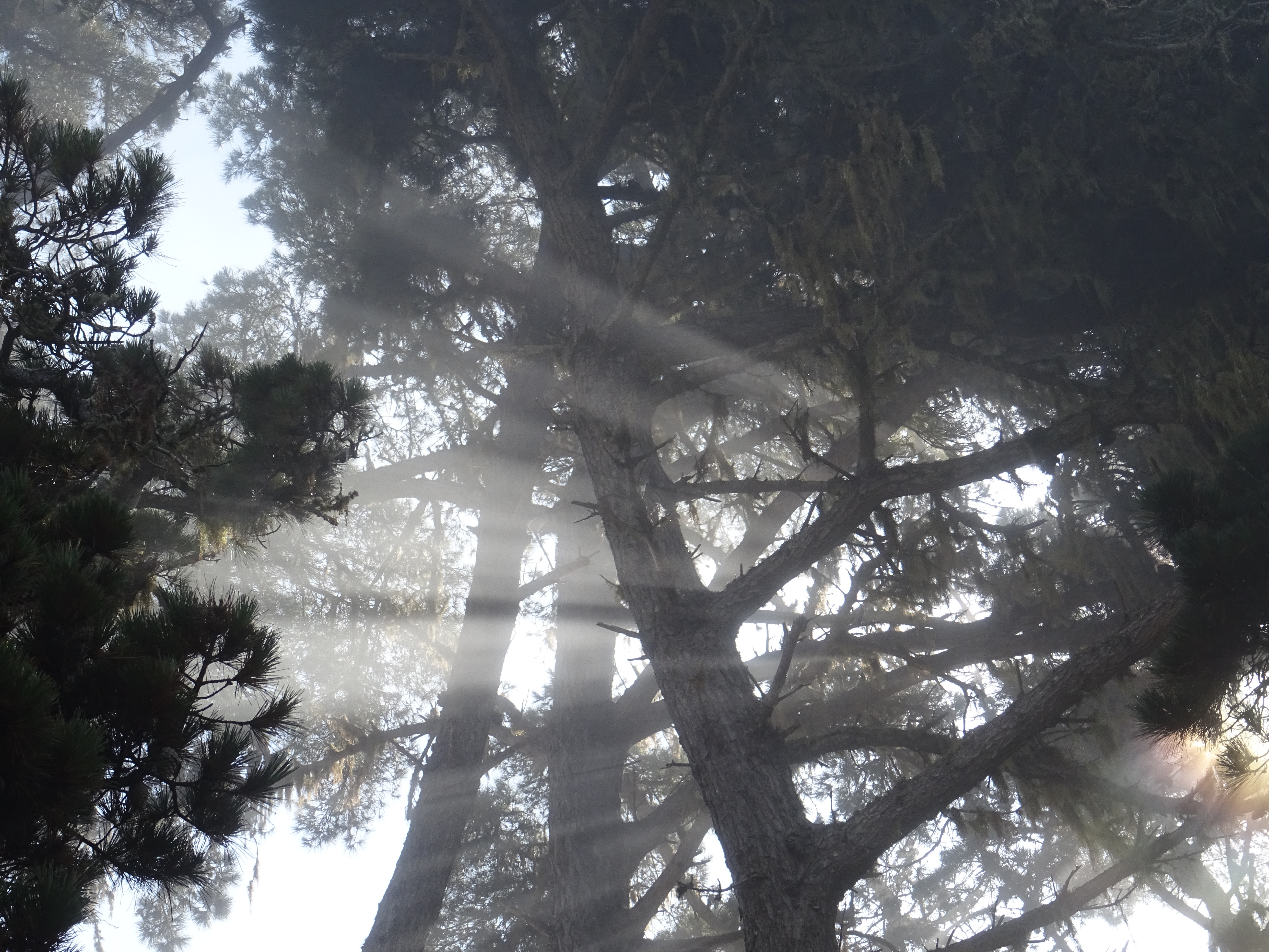 Streaks of sunlight through the fog and tree