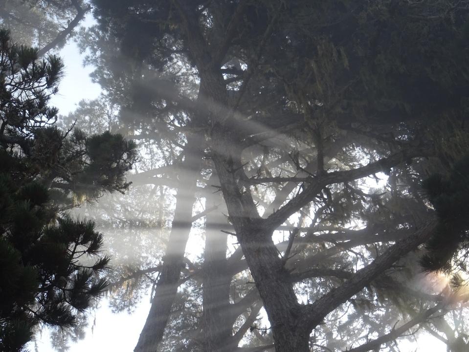 Streaks of sunlight through the fog and tree