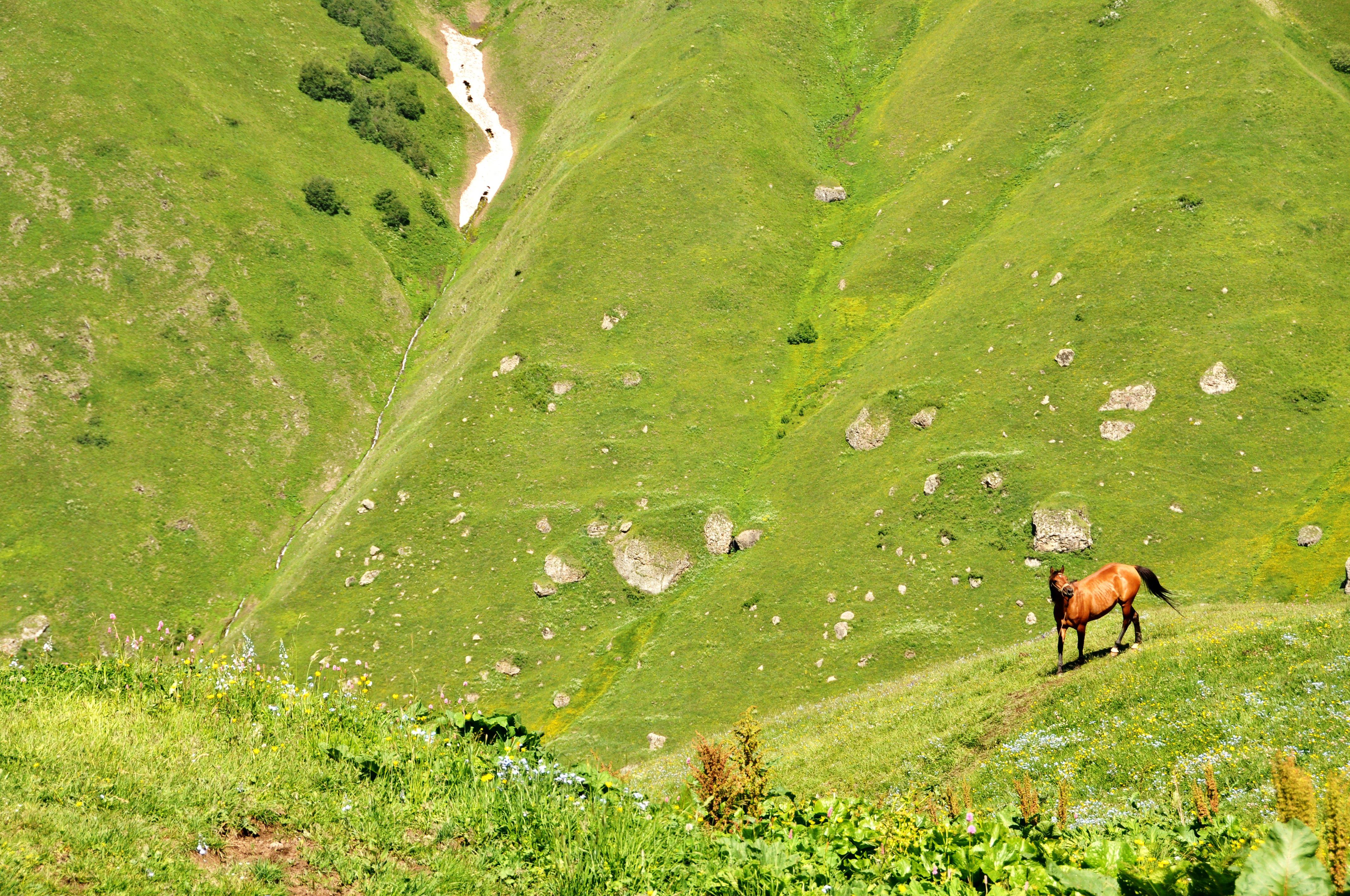 Wild horse in Juta Valley