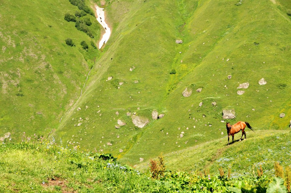 Wild horse in Juta Valley